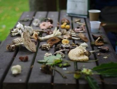 Funghi Foray 2019