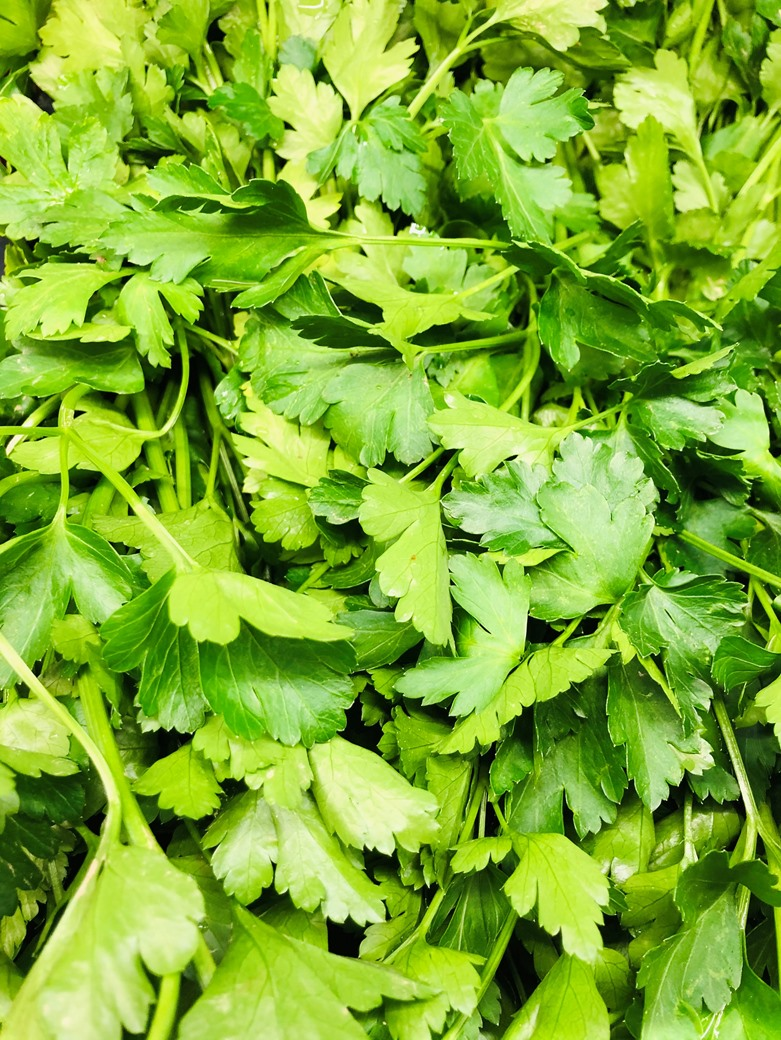 Italian Parsley Prezzemolo Bunch